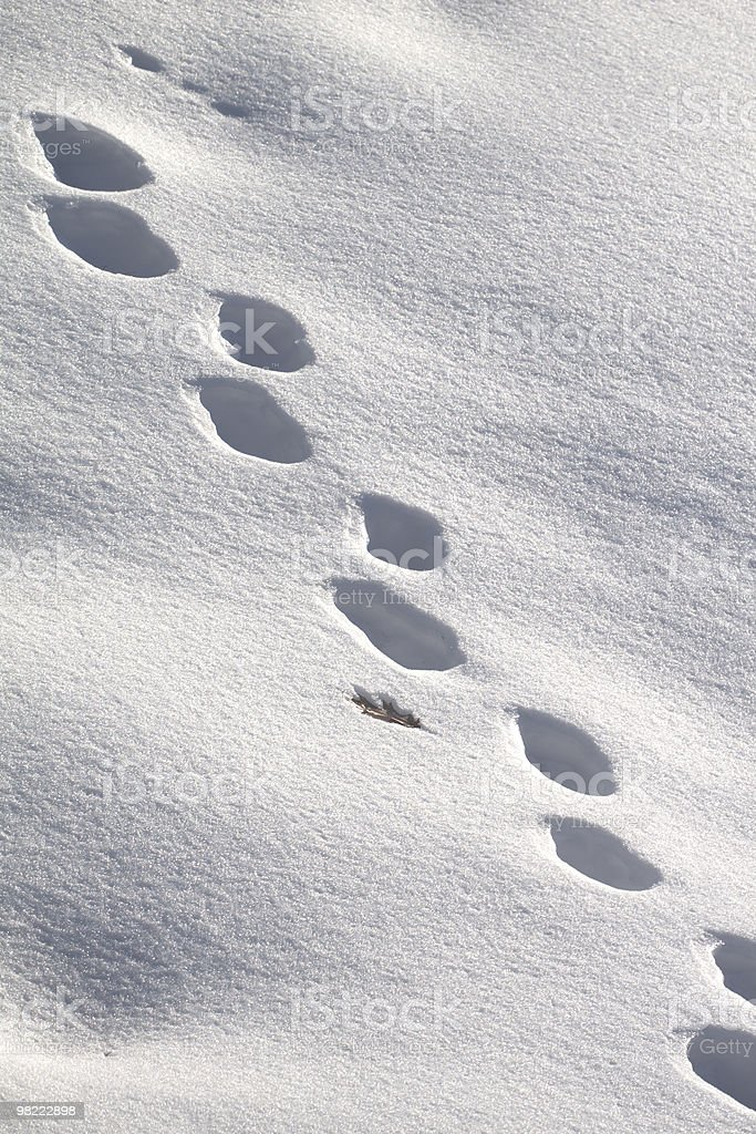 Footsteps in Snow royalty-free stock photo