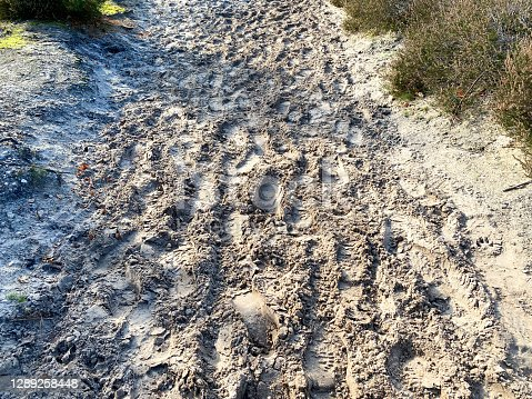 istock Footsteps in the sand 1289258448