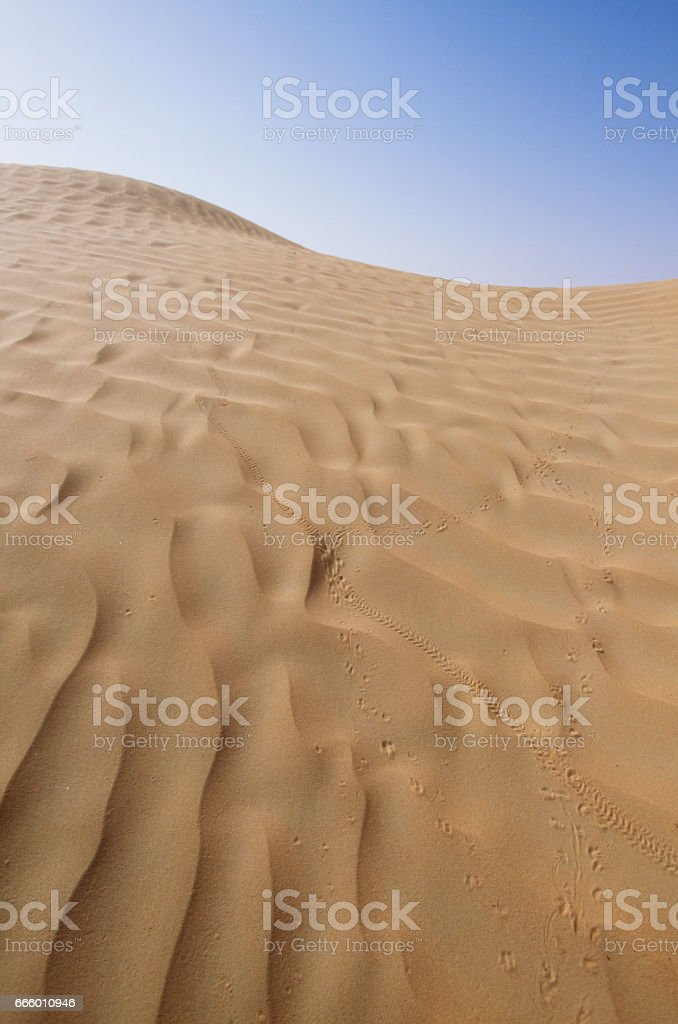 Footsteps of desert and bugs stock photo
