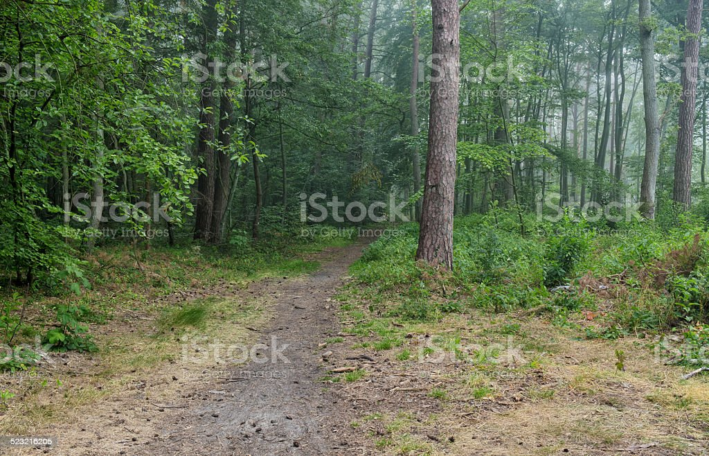 Footway in forest stock photo