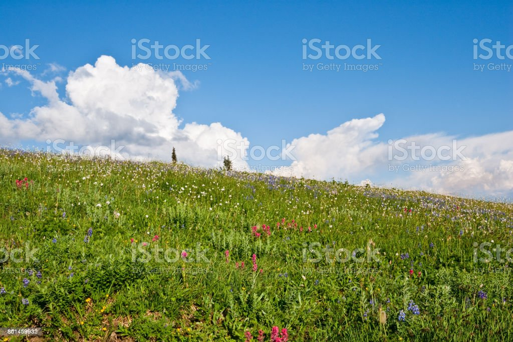Alpine Meadow and Cloud Formation stock photo