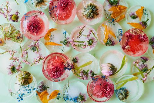Studio shot of flowers frozen into ice blocks