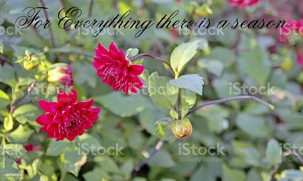 For Everything There Is A Season stock photo