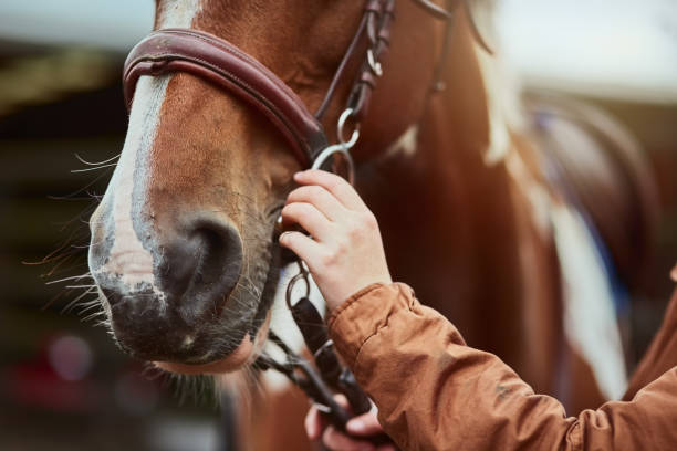 for her safety as well as her pony's - horse stock pictures, royalty-free photos & images