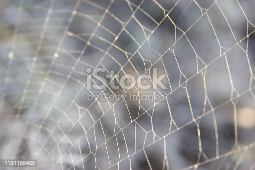 istock for text web on nature 1151155405