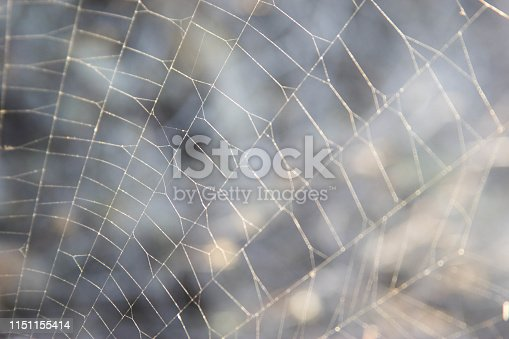istock for text web on nature 1151155414