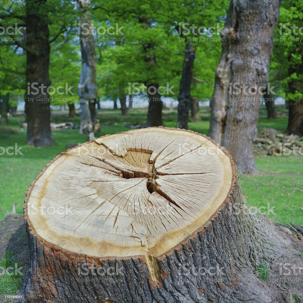 For the Love of Wood XXL royalty-free stock photo