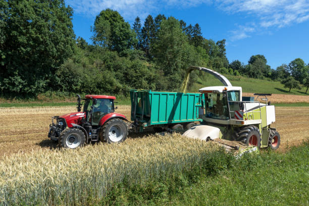 Forage harvester and tractor with trailer at harvest Harvest of whole plant silage with forage harvester and tractor with trailer on a cereal field foraging stock pictures, royalty-free photos & images