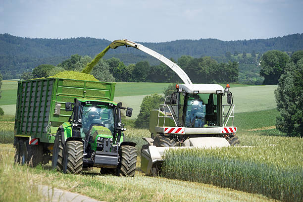 Forage harvester during harvesting of whole crop silage Forage harvester with chopped material transporter during harvesting of grain as whole crop silage for biogas production  foraging stock pictures, royalty-free photos & images