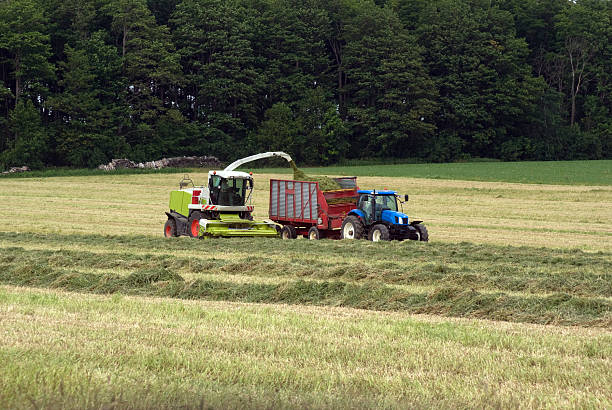 Forage Harvester in Hay Field A forarge harvester chops and blows hay into a wagon being pulled by a tractor.Similar Images. foraging stock pictures, royalty-free photos & images