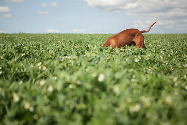 Foraging dog stock photo