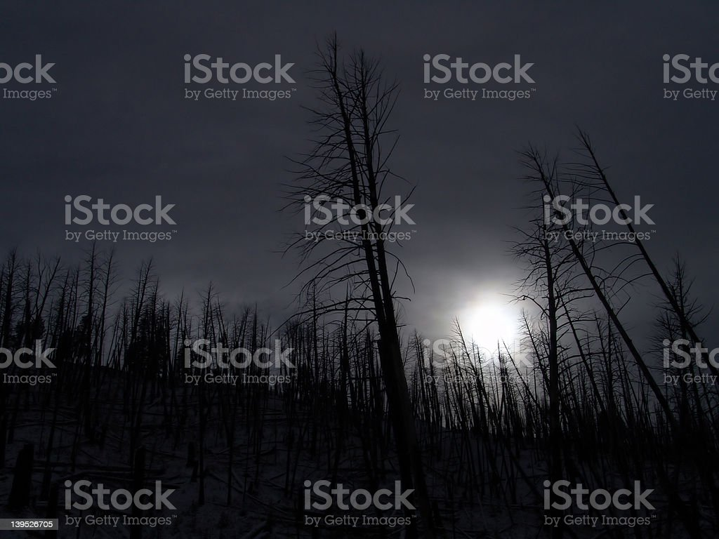 forbidden forest royalty-free stock photo