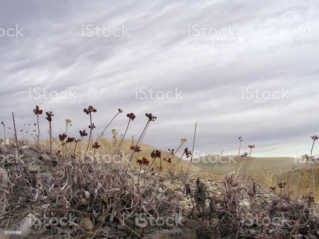 forbs on a hill stock photo