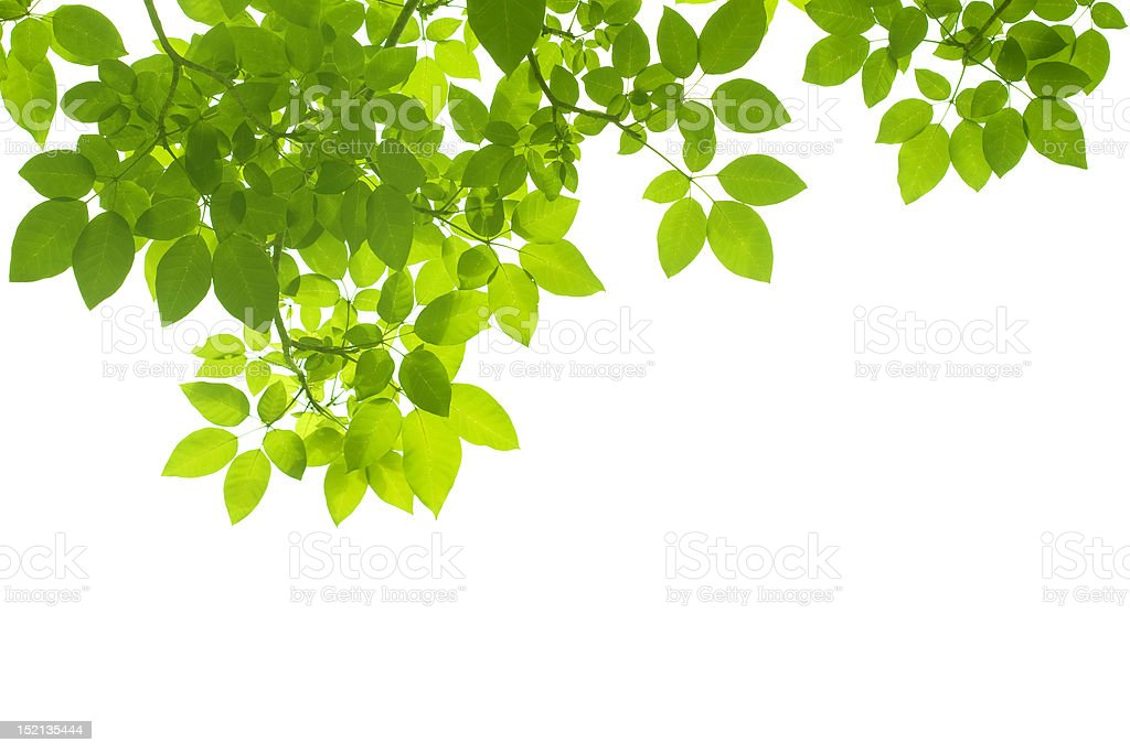 Foreground of Leaves on the top stock photo