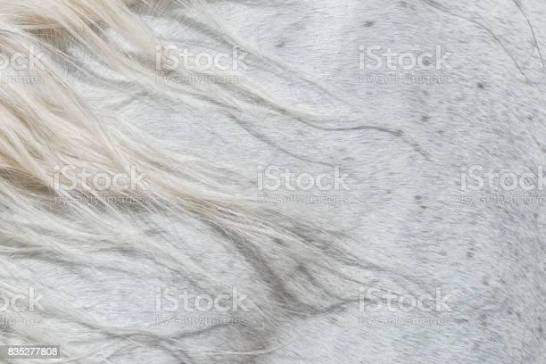 Forelock of a white horse picture id835277808?b=1&k=6&m=835277808&s=612x612&h=hhdspnz2ajwvjgdn93h14eec0gpvxnvf3yt7ii7yfgg=
