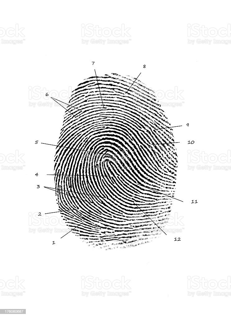 Forensic Fingerprint Identification Stock Photo Download Image Now Istock