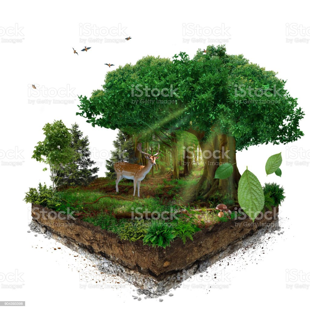 Forest. 3d isometric stock photo