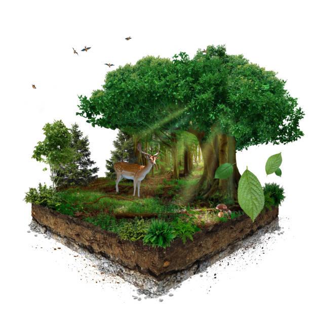 Wald. 3D isometrische – Foto