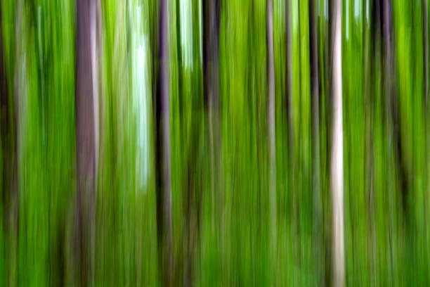 Wald abstrakt – Foto