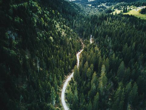 forest aerial view in switzerland