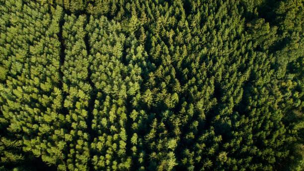 Wald - Luftbild – Foto