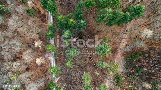Forest, winter season. Storm damage - aerial view