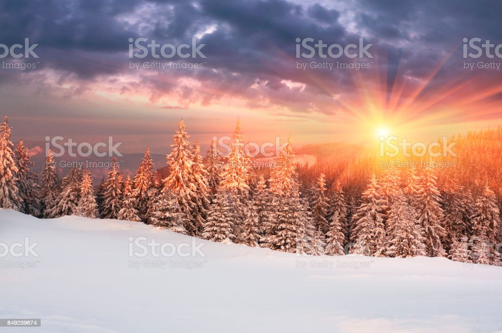 Forest after a storm in the Carpathians stock photo