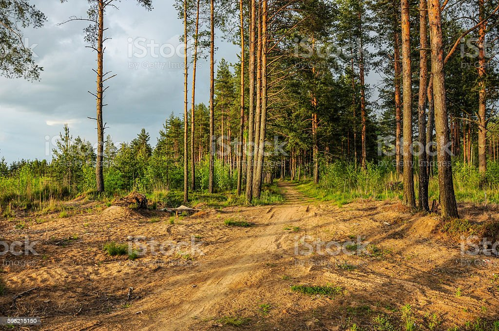 Forest after a storm. foto royalty-free