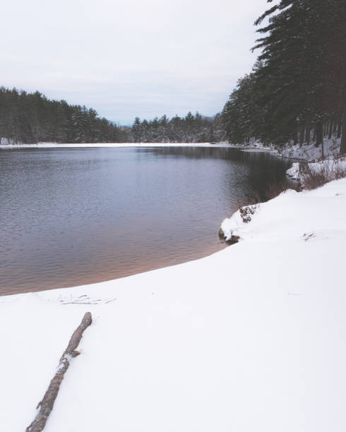 A forest and a lake on an overcast winter day stock photo