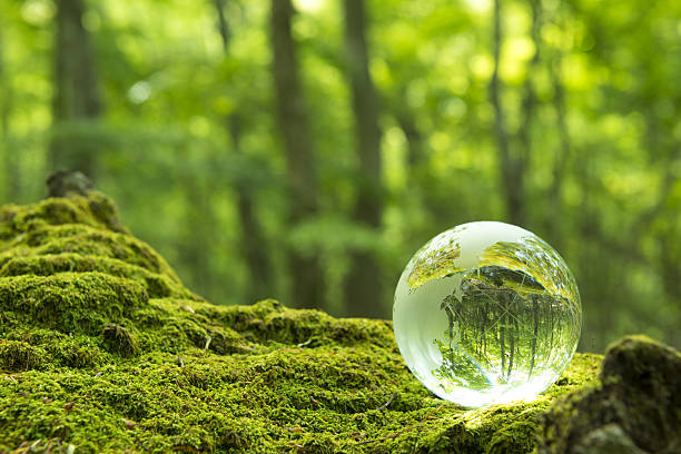forest and a transparent globe - 環境問題 ストックフォトと画像