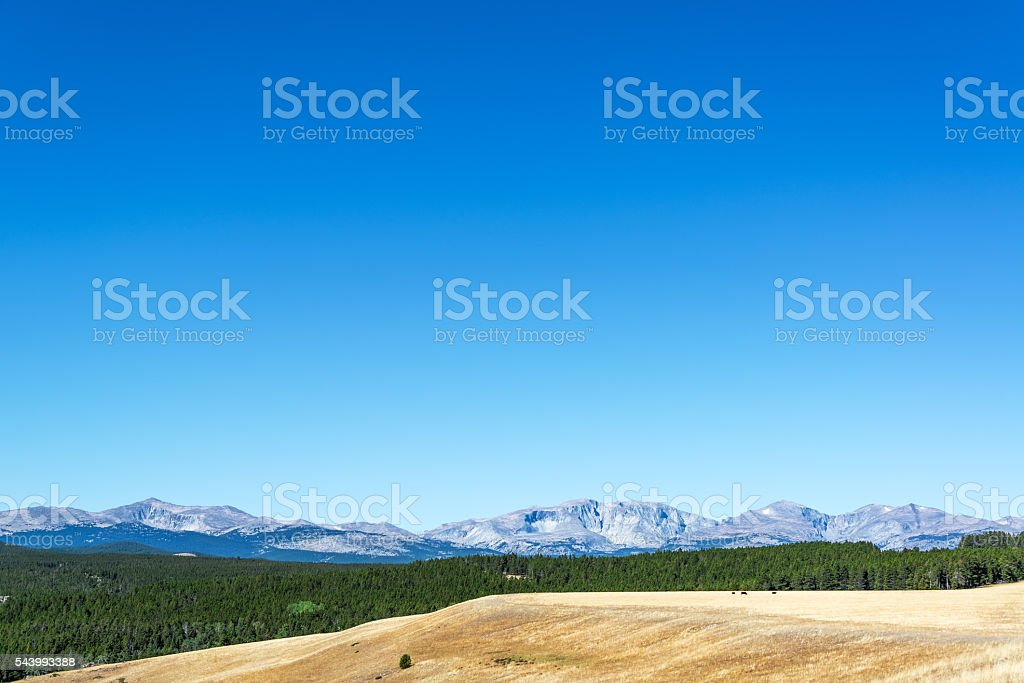 Forest and Bighorn Mountains stock photo