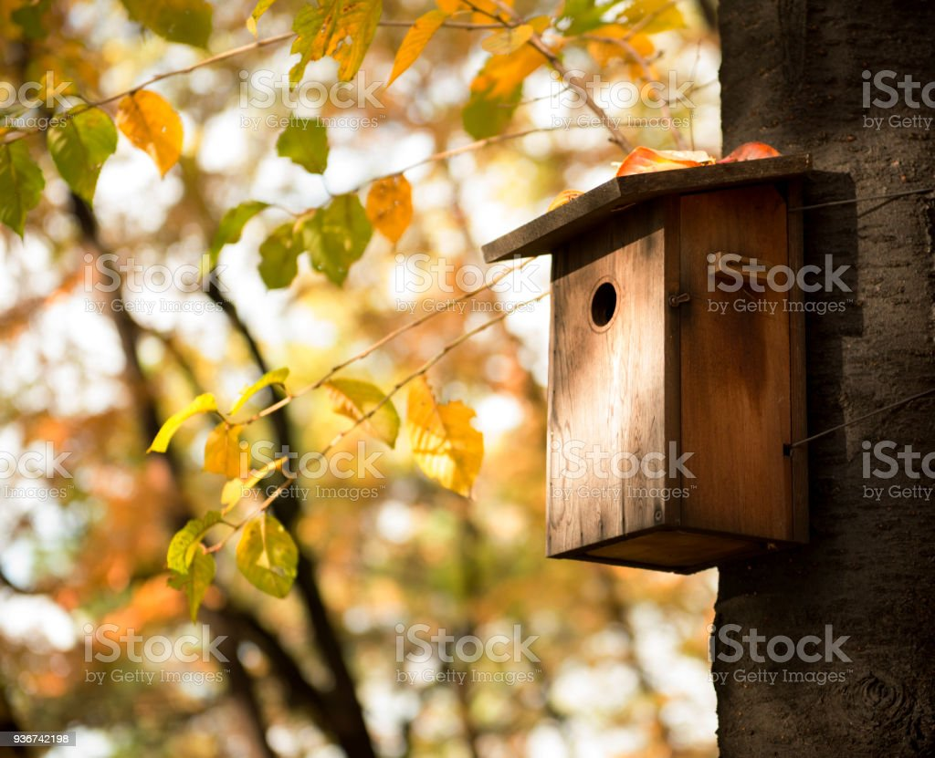 Forest and bird house stock photo