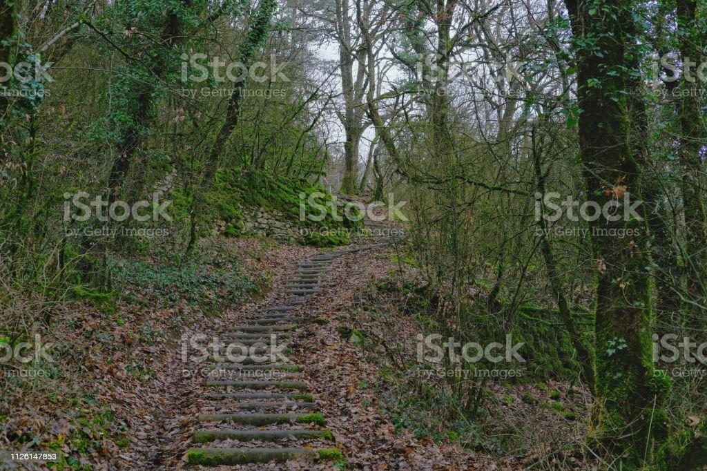 Forêt et environnement - Photo