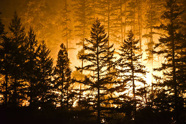 forest and flames - 2015 stock pictures, royalty-free photos & images