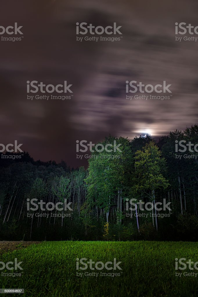 forest and flashlight stock photo