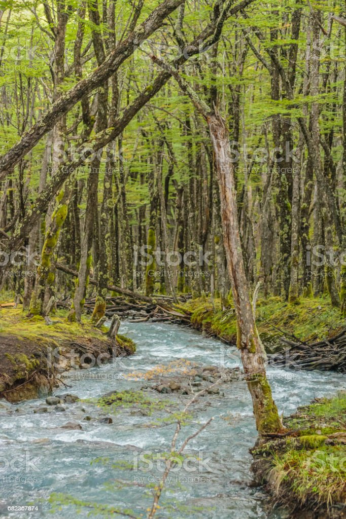 Forest and Glacier Stream, Patagonia - Argentina foto stock royalty-free