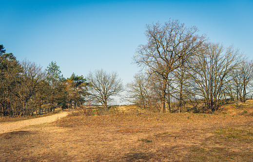 Forest and heathland at the start of the spring season in the Netherlands