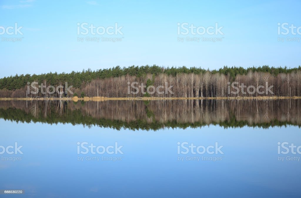 Forest and its reflection in river in spring day stock photo