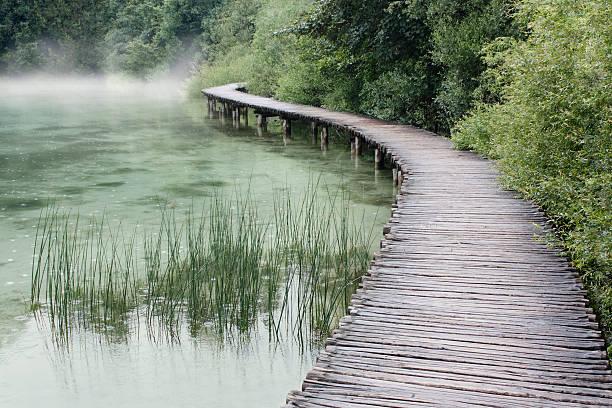 sentier de la forêt et le lac - paysage zen photos et images de collection