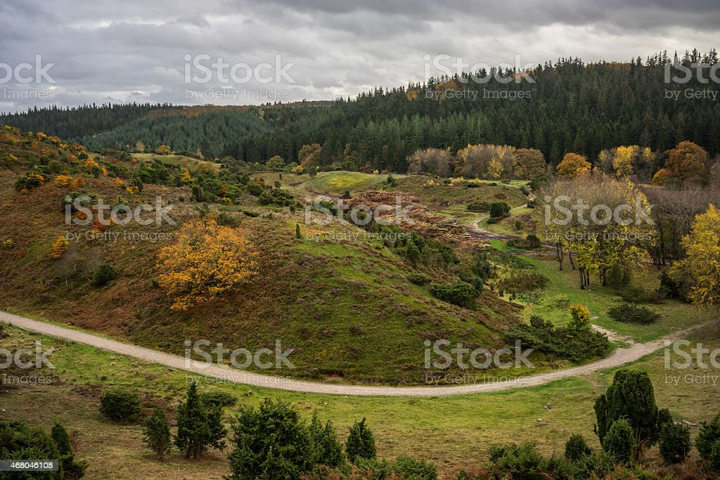 Forest and landscape in Denmark stock photo