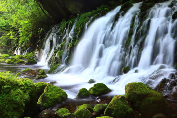 Forest and mountain stream stock photo