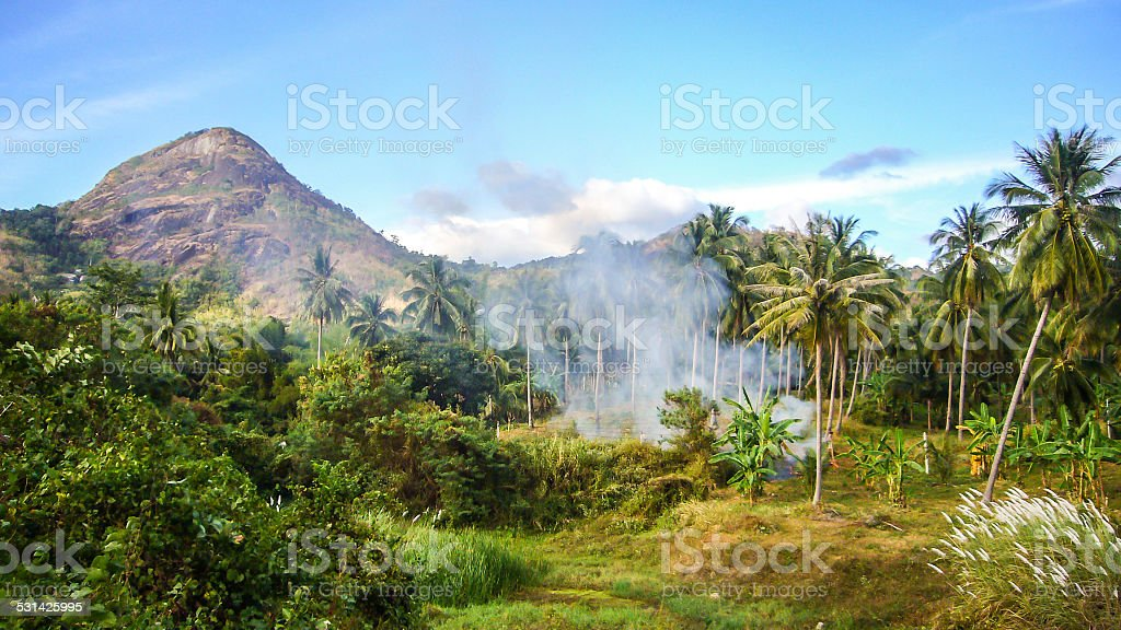 Forest And Mountain View stock photo