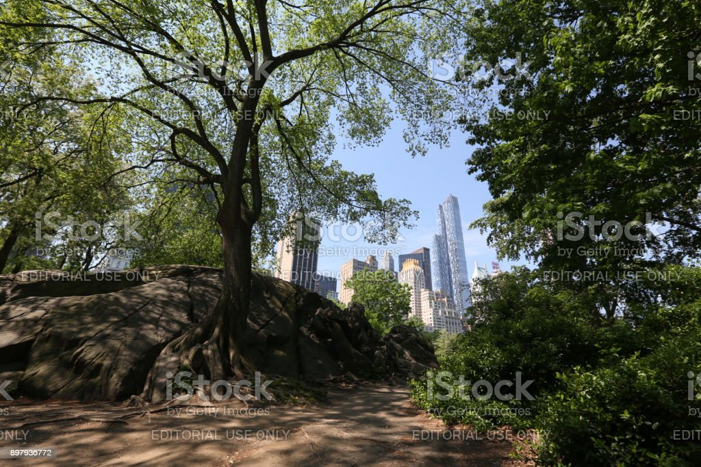 Forest and New York City. America, New York City - May 14, 2017 stock photo