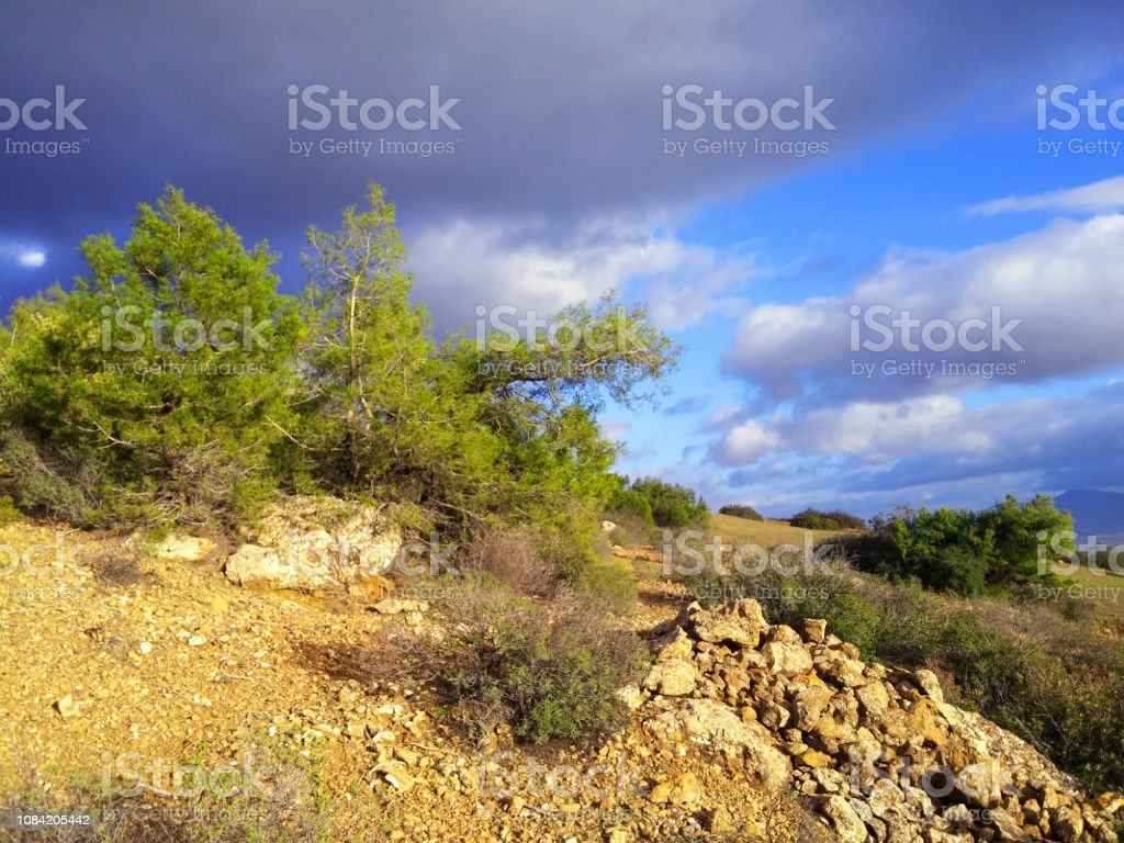 Forest And Pine Trees With A Wonderful Blue Sky Hd Wallpaper Stock Photo Download Image Now Istock