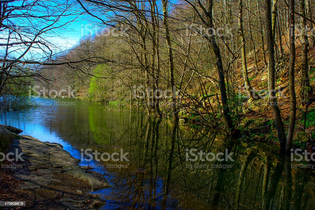 Forest and river. Montseny Natural Park. Spain stock photo