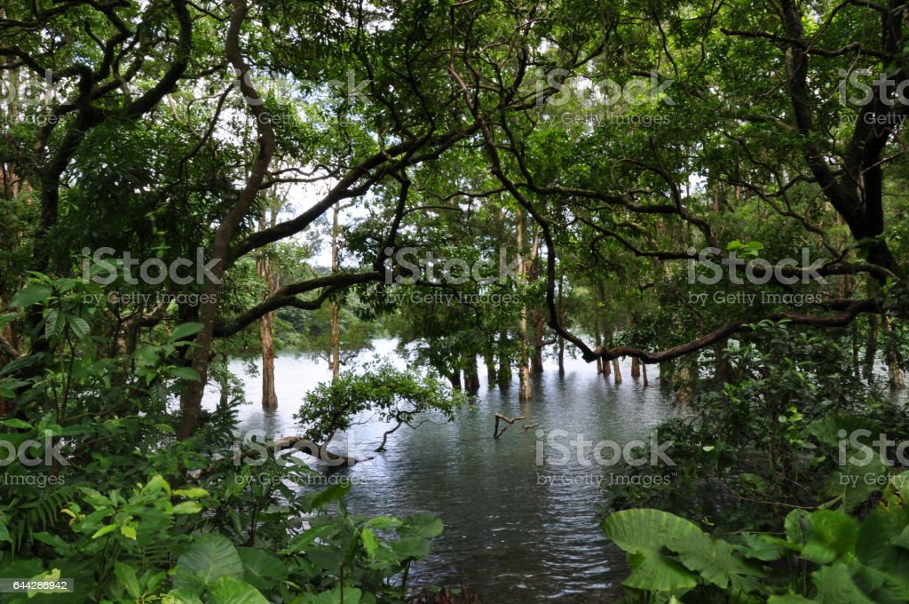 Forest and River Scenery stock photo