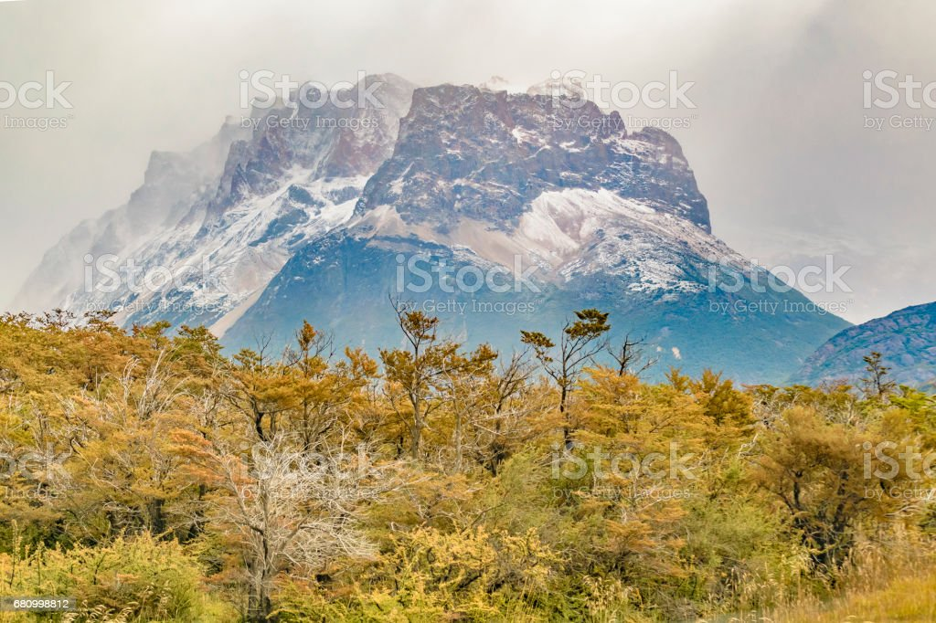 Forest and Snowy Mountains, Patagonia, Argentina royalty-free stock photo