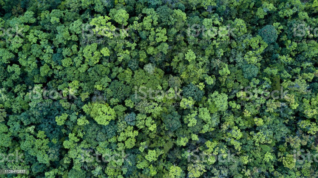 Forest and tree landscape texture background, Aerial top view forest, Texture of forest view from above. - Foto stock royalty-free di Albero