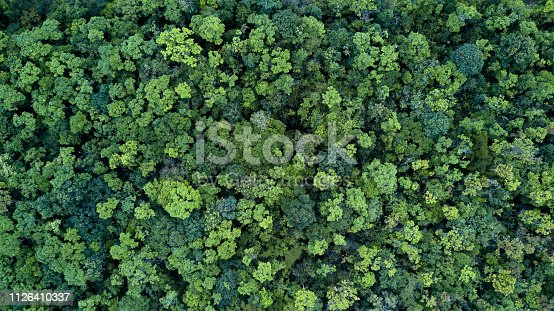 istock Forest and tree landscape texture background, Aerial top view forest, Texture of forest view from above. 1126410337
