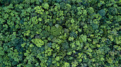 Forest and tree landscape texture background, Aerial top view forest, Texture of forest view from above.